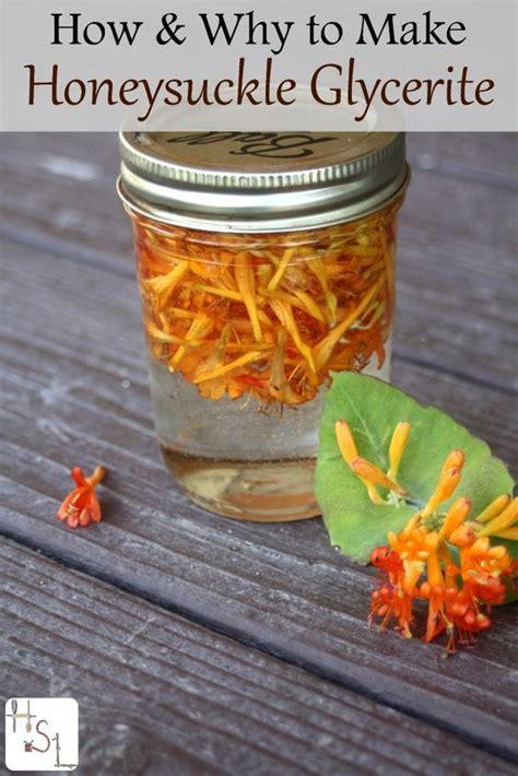 Honeysuckle Juice Detox by How To Make Honeysuckle Glycerite Flashes Treat