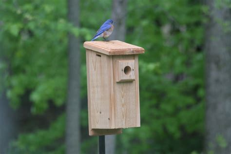 bluebird houses plans pin blue bird house plans northern kentucky real estate blog on pinterest