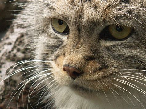 by cat pallas cat by originalspacecowgirl on deviantart