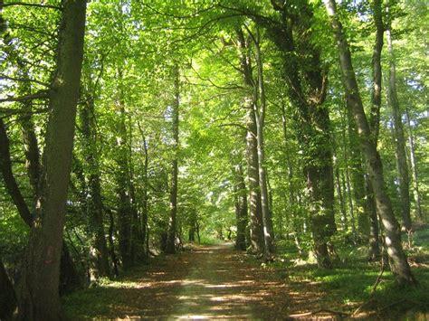 imagenes de bosques verdes apple se compra un bosque os contamos para qu 233