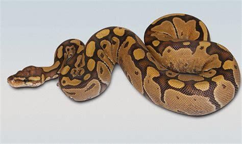 python pattern html art quill studio historical australian crochet margaret