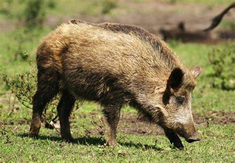 imagenes variadas de animales fotos de animales omn 237 voros animales omn 237 voros
