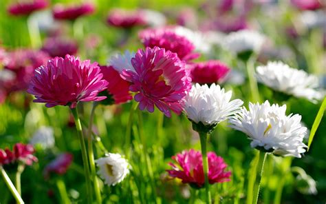 flowers photos flowers for flower lovers hd flowers wallpapers