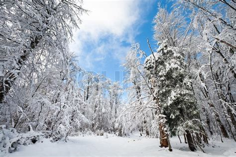 snowbound winter earthroad  beautifulmountain snow