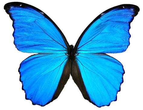 butterfly background images cliparts co