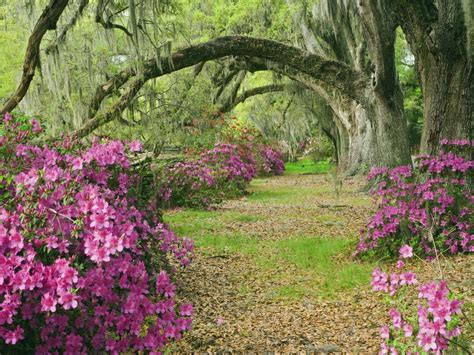 Flower Garden Tree G Wallpaper 1600x1200 176834 Flower Gardens In