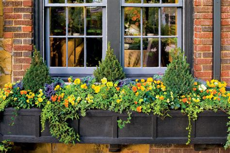 window box planting ideas show stopping autumn window box fall container gardening