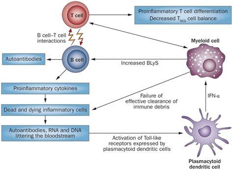 new autoimmune crisis for lupus reaches human trials