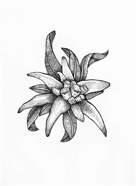 edelweiss flower symbolises courage tattoos