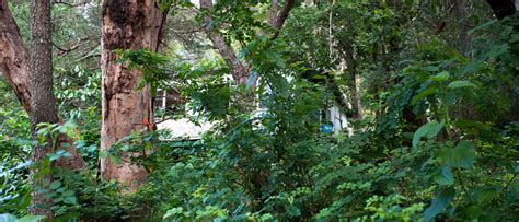 River Garden by The Planthunter River Garden Diaries Thoreau And Design Dilemmas