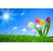 Fondo De Imagen Flores Fantasia