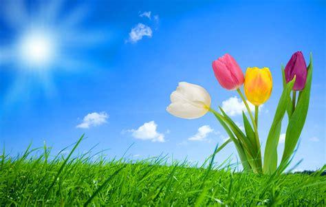 interesantes y bonitos fondos de escritorio de flores fondo pantalla flores fantasia