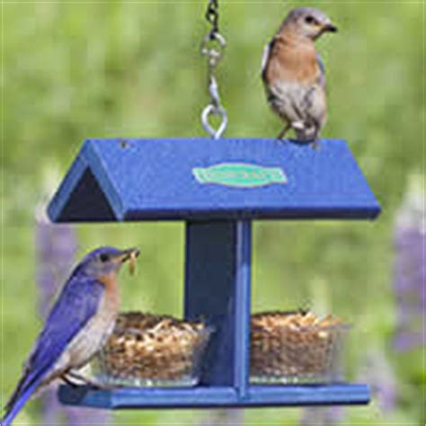 duncraft bluebird feeders mealworm bird feeders the