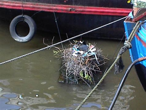 trash boat amsterdam amsterdam