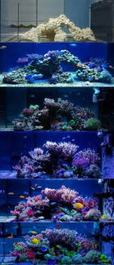 marine aquarium aquascaping 17 best ideas about saltwater aquarium on pinterest