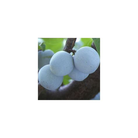 serre en verre 2679 c 233 losie semer planter entretenir et profiter