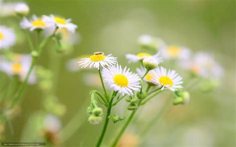 bureau fond d 馗ran tlcharger fond d ecran insectes vert widescreen fleurs