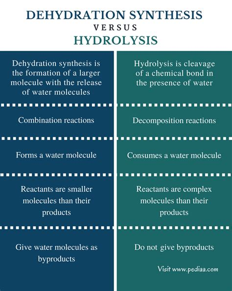 condensation or dehydration difference between dehydration synthesis and hydrolysis