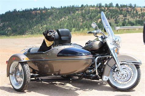 Top 10: What dogs and bikes have in common   Beantown Baggers