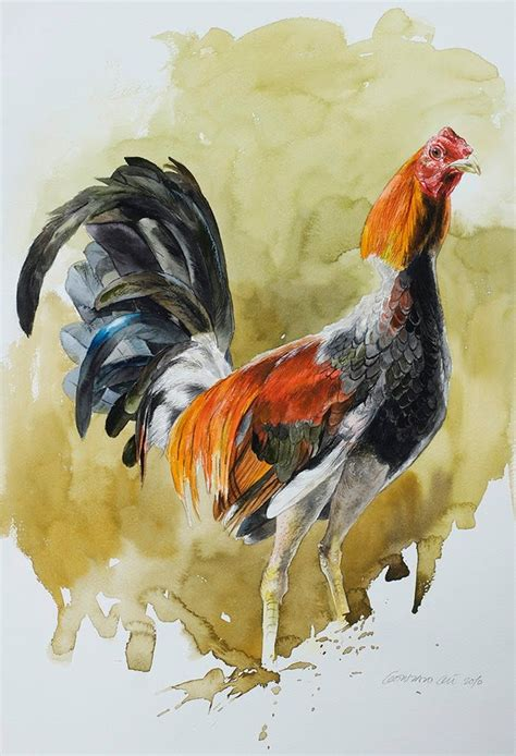 peleas de gallos 9 best images about gallos on pinterest dibujo artworks