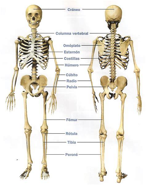 imagenes de los nombres del cuerpo humano en ingles esqueleto del cuerpo humano con todos los nombres de los