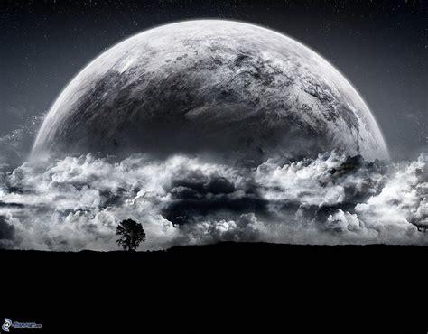 nymphas noirs terres de b005r2108m plan 232 te terre
