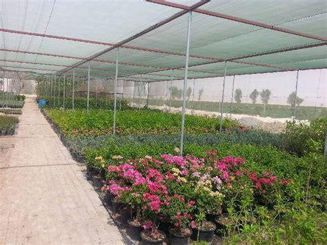 Landscape Design Qatar Al Naqi Landscape Company W L L Qatar Doha Landscape