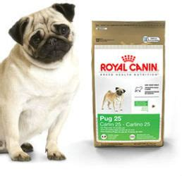 best food to feed pugs best pug food when purchasing pug food be sure to check for quality ingredients