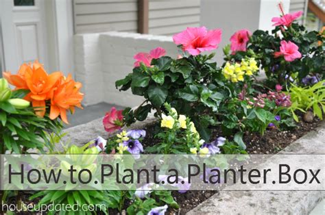 Best Plants For Planter Boxes how to plant a planter box with flowers and other plants house updated