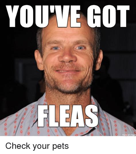 Darimeyahave You Got Yours by You Ve Got Fleas Check Your Pets Meme On Sizzle