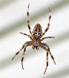 Barns Wolf Trap Pest Control Identification Common Spider Pests