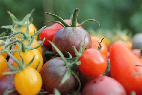 Tomaten Mit Geschmack 5230 tomaten die schale vom ei