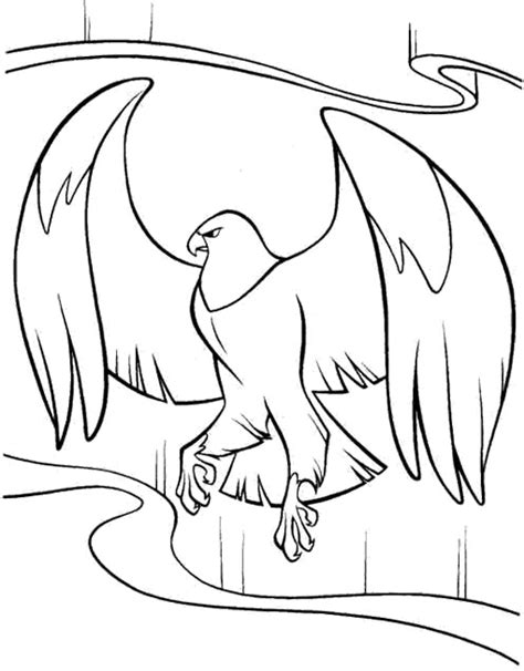 cartoon eagle coloring pages cartoon eagle coloring pages animals pinterest eagle