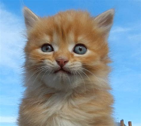 imagenes chistosos para descargar gratis descargar imagenes de gatos graciosos socalimodelscom
