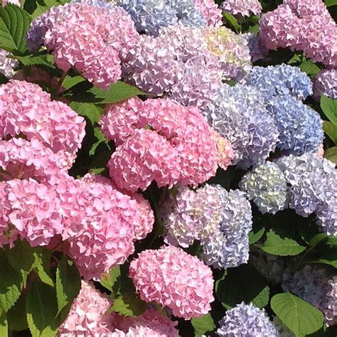 small flowering shrubs for landscaping flowering shrubs con kel landscaping