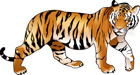 clipart tiger tiger png images the deadly asian cat png only