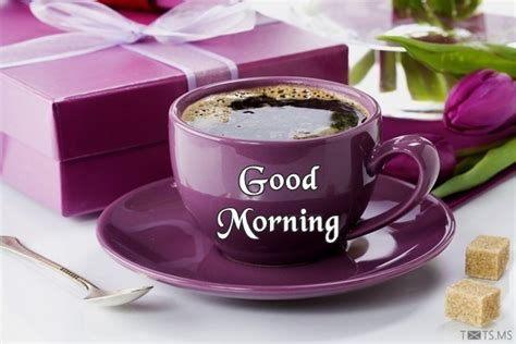 Good Morning Quotes for Friends, Messages, Images for Facebook, WhatsApp Picture SMS   Txts.ms