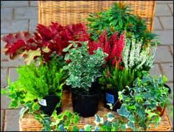 Steingartenpflanzen Kaufen