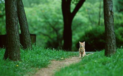 cat animals nature feline park green trees grass