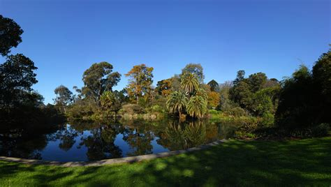 Royal Botanic Gardens Melbourne Botanic Garden In Royal Melbourne Botanical Gardens