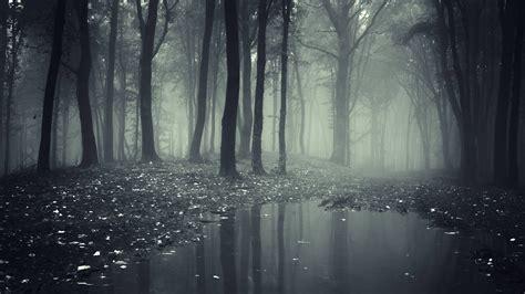 el bosque oscuro the 8466660925 viral 237 zalo la aventura en el bosque oscuro 191 cu 225 l ser 237 a tu destino