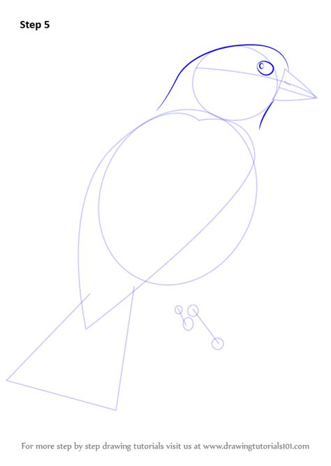 how to draw a goldfinch learn how to draw an american goldfinch birds step by