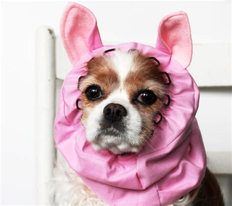 can puppies pig ears pink pig ears snood stay put 3 rows elastic thread pet