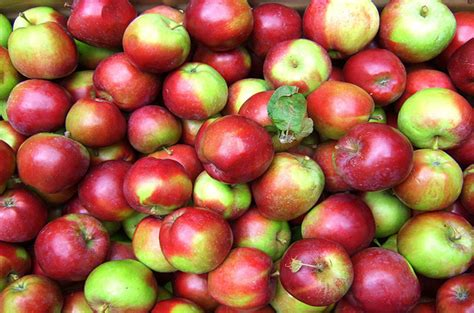 what fruits can puppies eat top 10 what fruits can dogs eat petguide