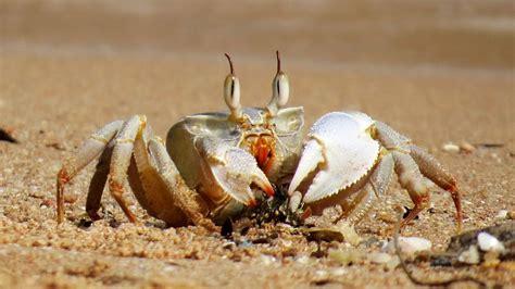 Crab Photos