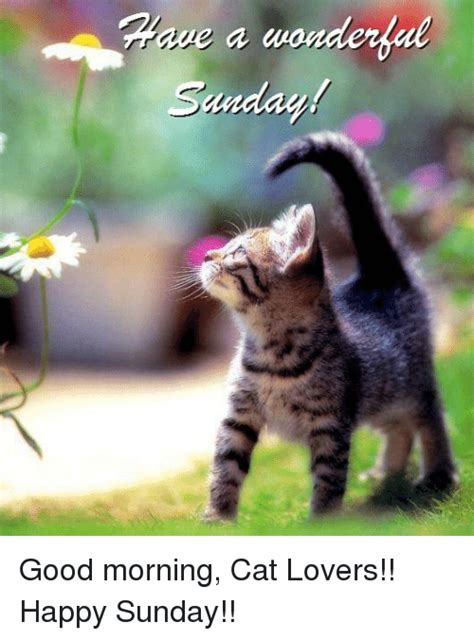 A Cat On A Sunday by Cat Humor 4 Page 21 Forums At Psych Central