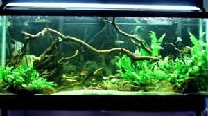 Aquascape Pumps 55 Gallon Fish Tank Setup Ideas Current Aquarium Setups