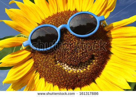 sunflower doodle god smiley stock photos images pictures