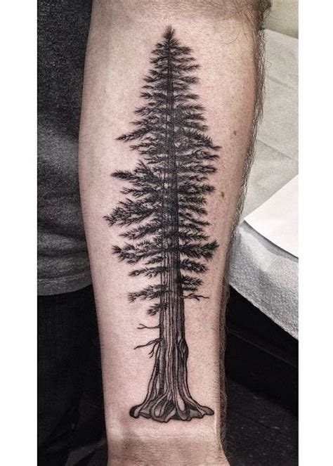 redwood tree tattoo pine tree i worked on today based a
