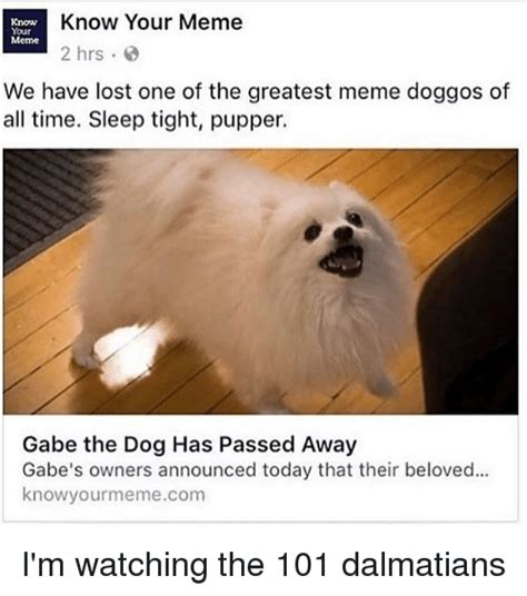 Know Your Meme Dog - know know your meme your meme 2 hrs we have lost one of